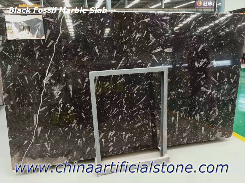 Morocco Black Fossil Marble Slabs
